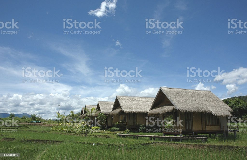 Paddy Resort Country royalty-free stock photo