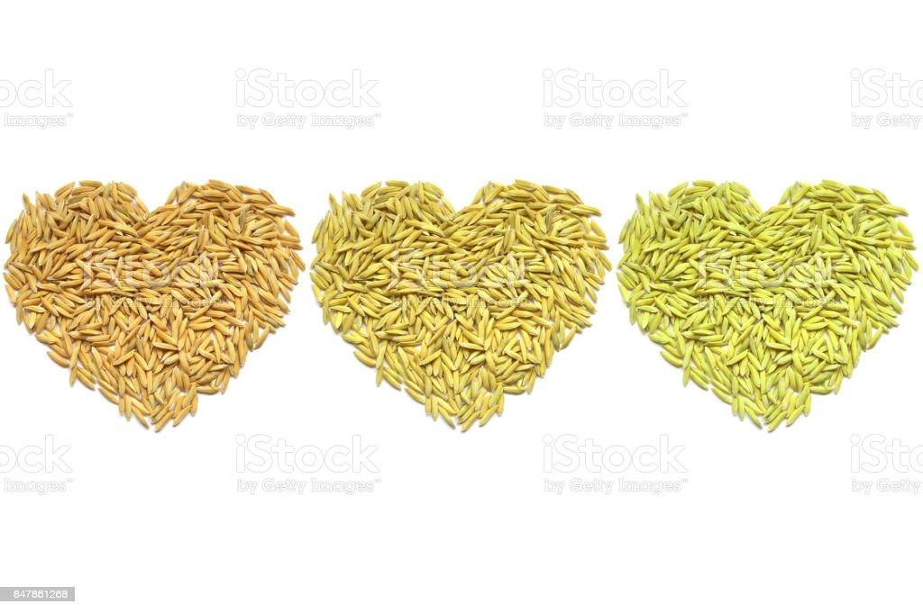 Paddy rice heart shape stock photo