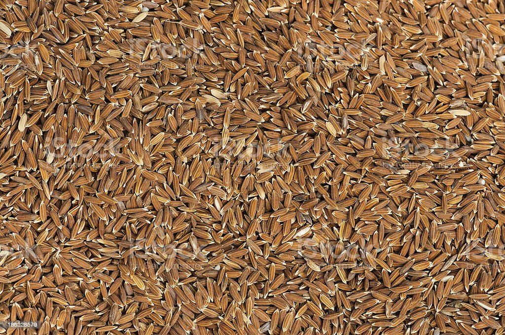 Paddy rice texture royalty-free stock photo