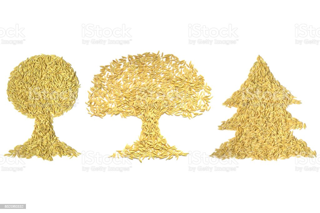 Paddy rice tree shape stock photo