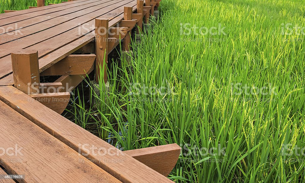 Paddy walkway royalty-free stock photo