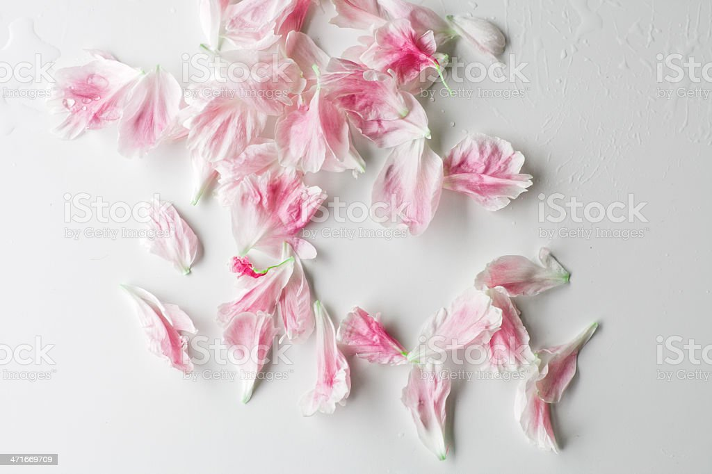 Paeonia petals background royalty-free stock photo