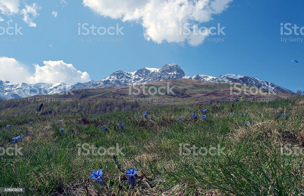paesaggio primaverile stock photo