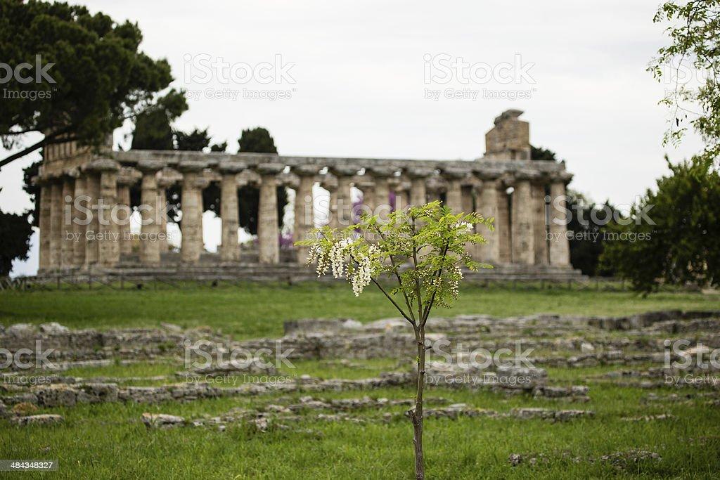 Paestum Neptune Temple royalty-free stock photo