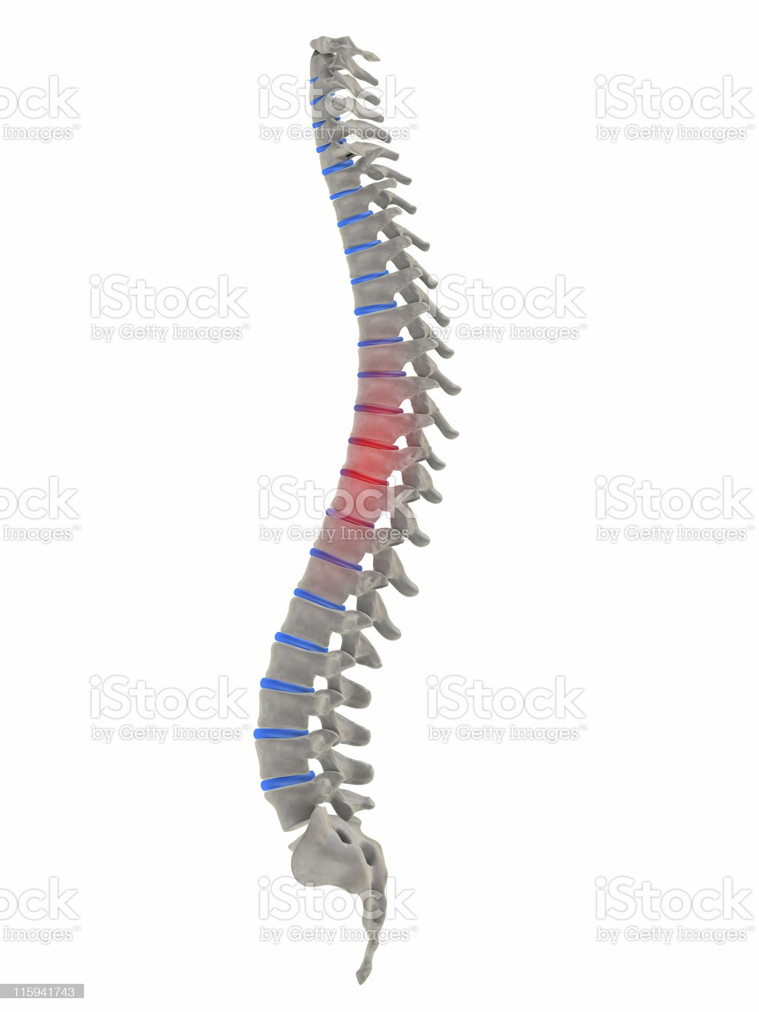 pain in the middle spine royalty-free stock photo