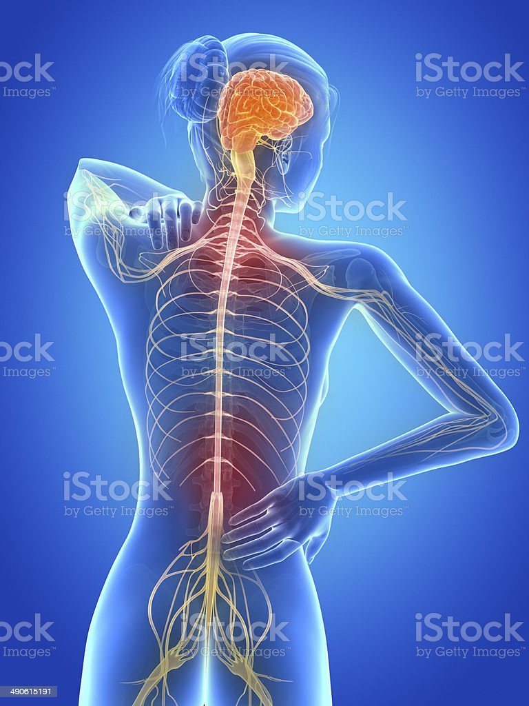painful back nerves stock photo