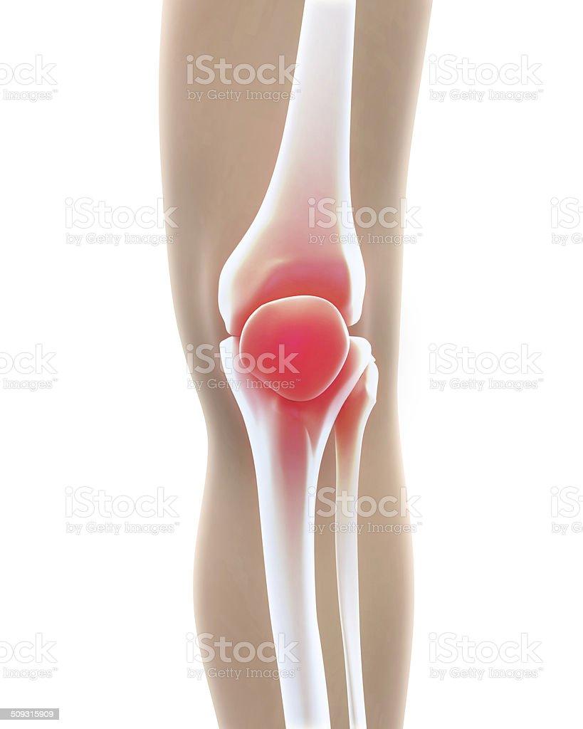 Painful Knee Illustration stock photo
