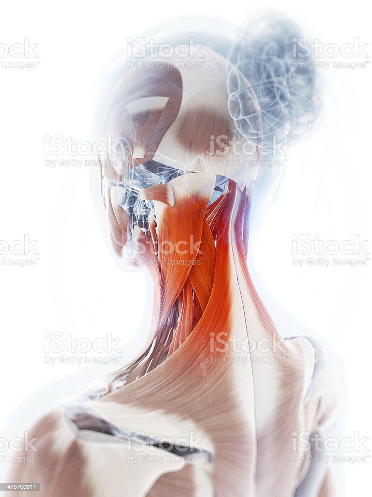 painful neck muscles royalty-free stock photo