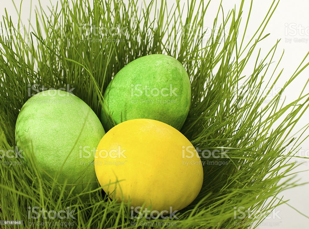 Painted easter  eggs in grass stock photo