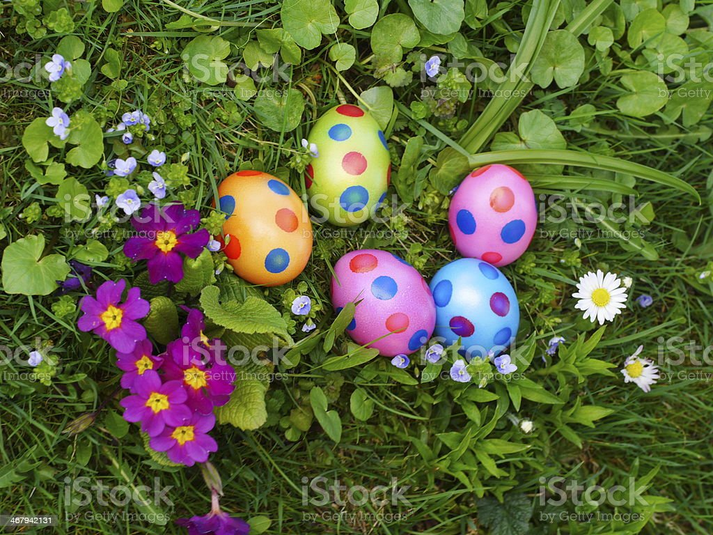 Painted Easter eggs next to purple primroses on grass stock photo