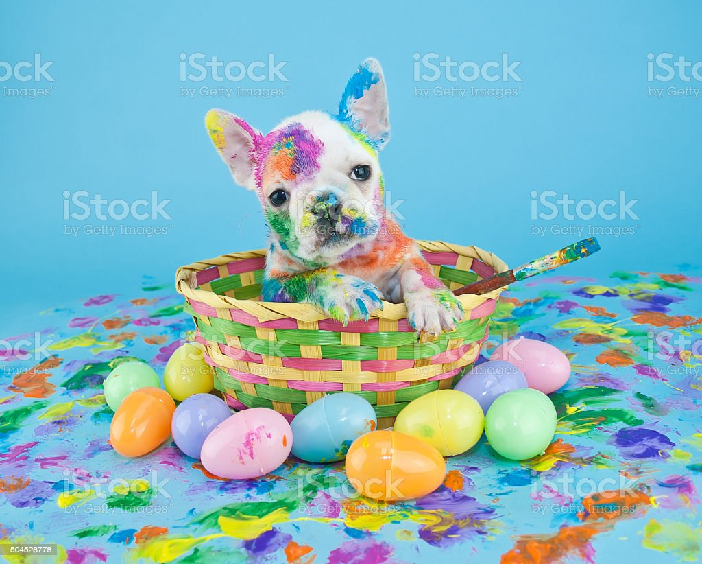 Painted Easter Puppy stock photo