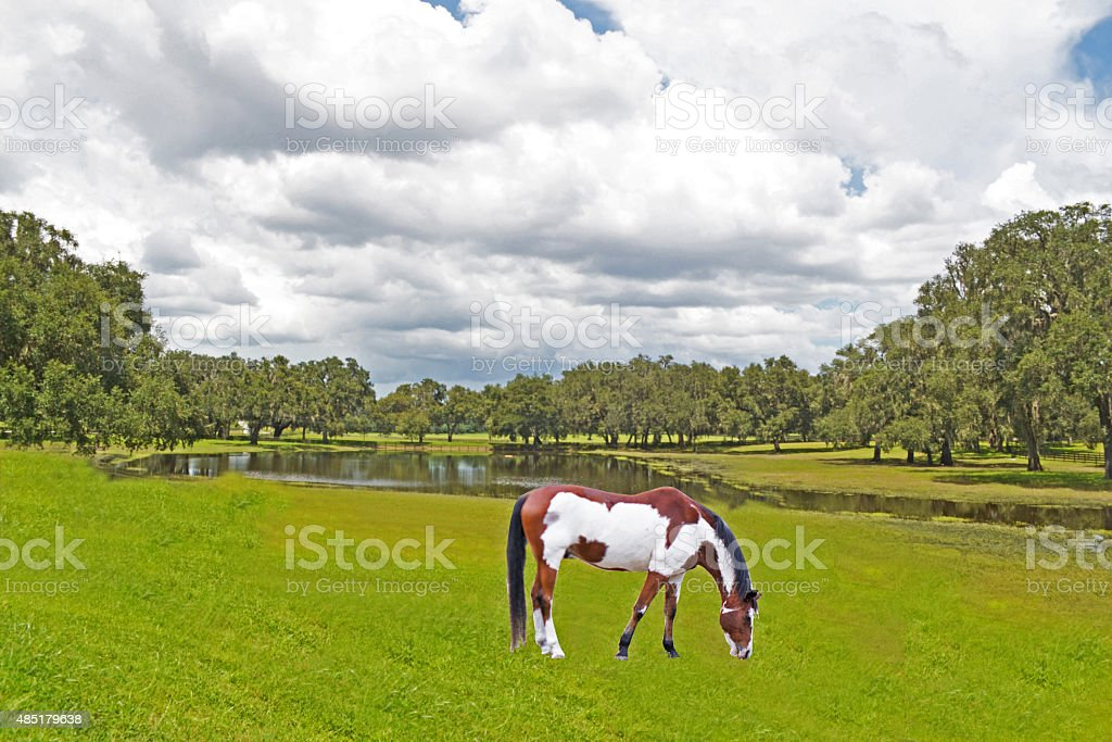 Painted Horse stock photo