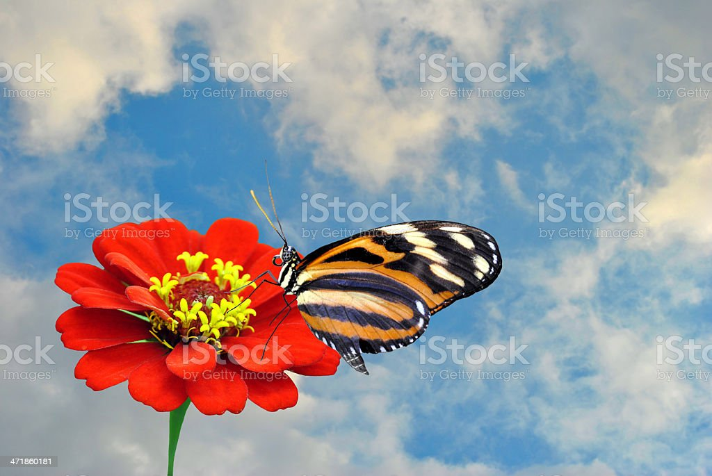 painted lady butterfly on a red flower royalty-free stock photo