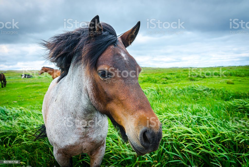Painted, multi-toned coloured horse comes up close. stock photo