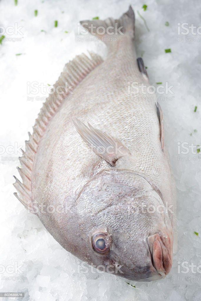 Painted sweetlips fish stock photo
