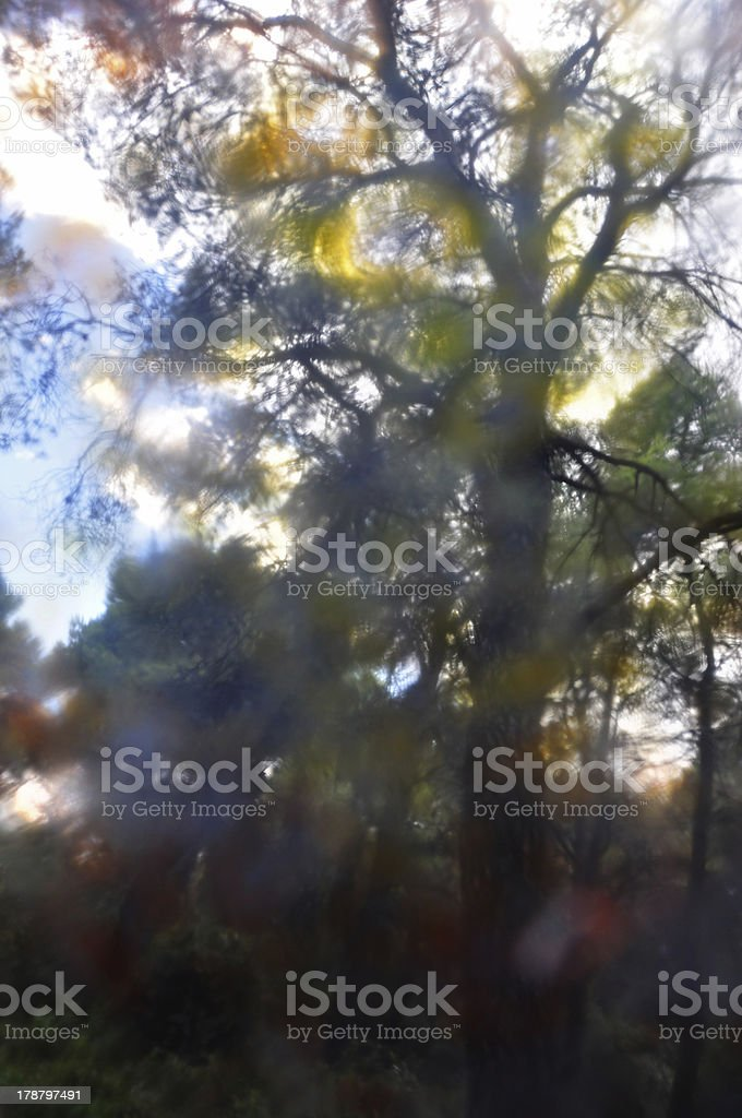 painted trees abstract royalty-free stock photo