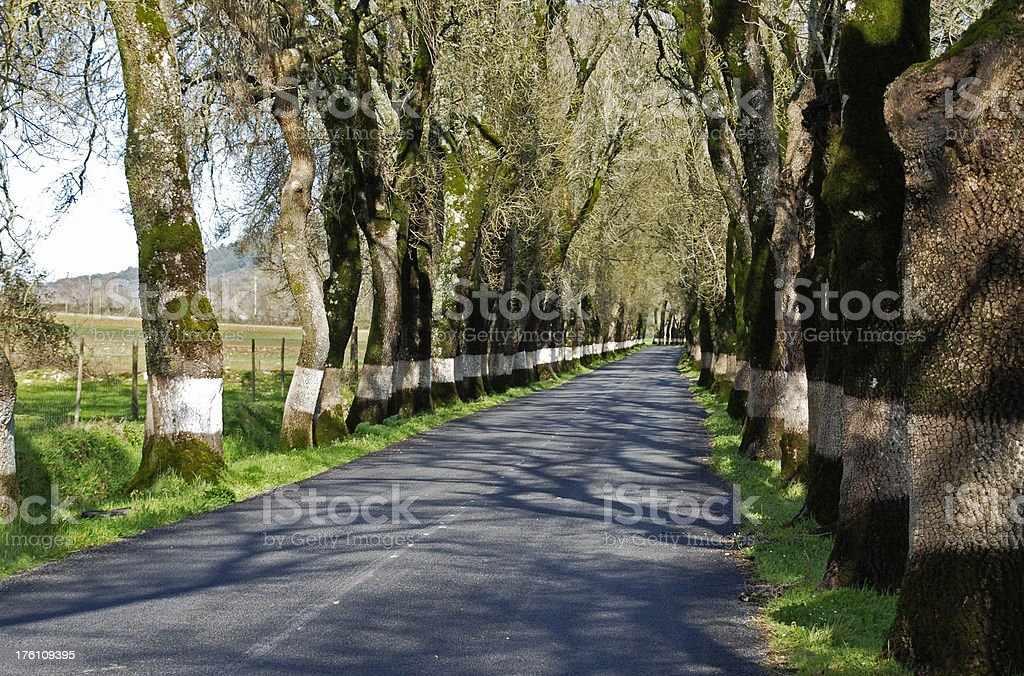 Painted trunks of trees on road in Portugal royalty-free stock photo