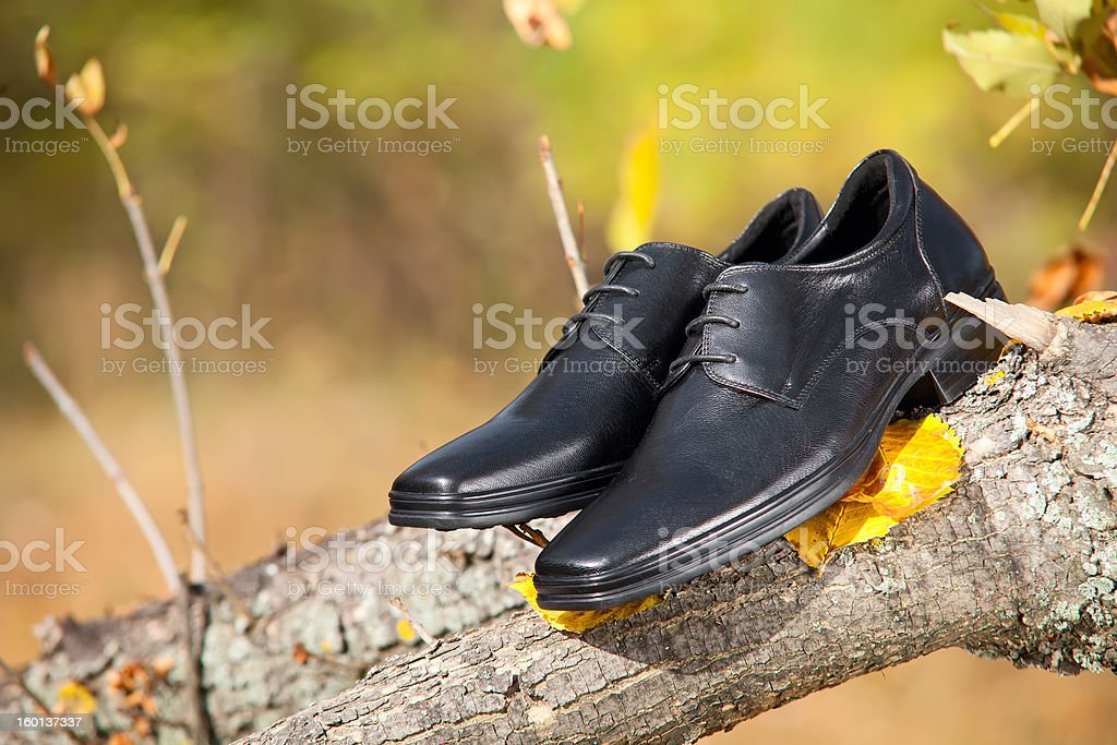 Pair of black male shoes in autumn park royalty-free stock photo