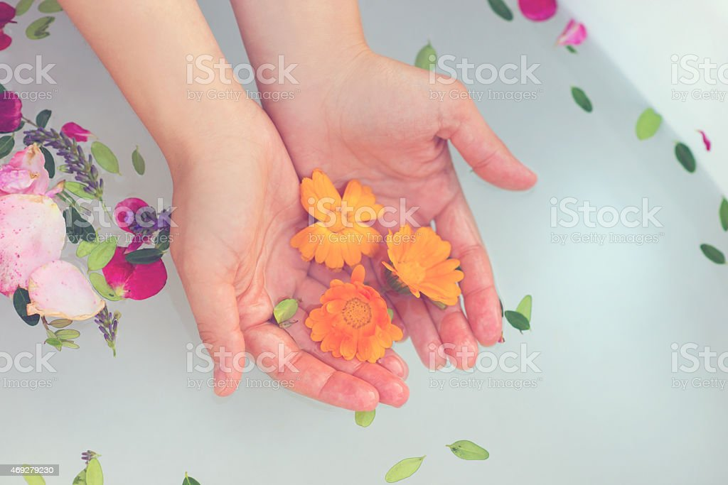 A pair of female hands placing some flowers in a water tub stock photo