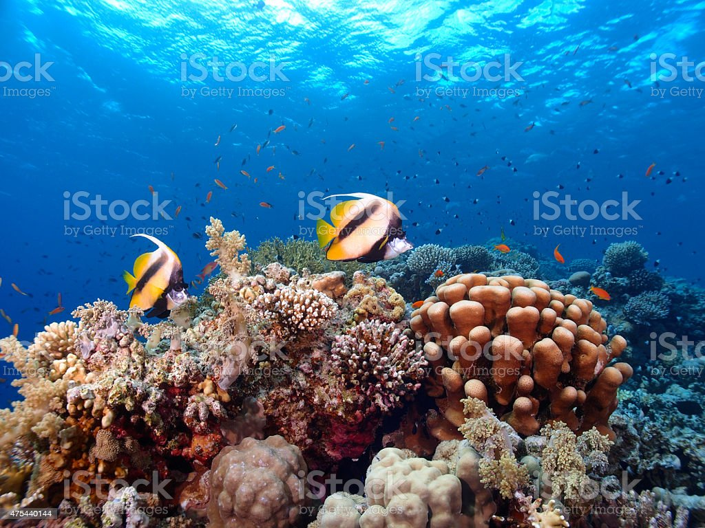 Pair of fish and coral reef stock photo