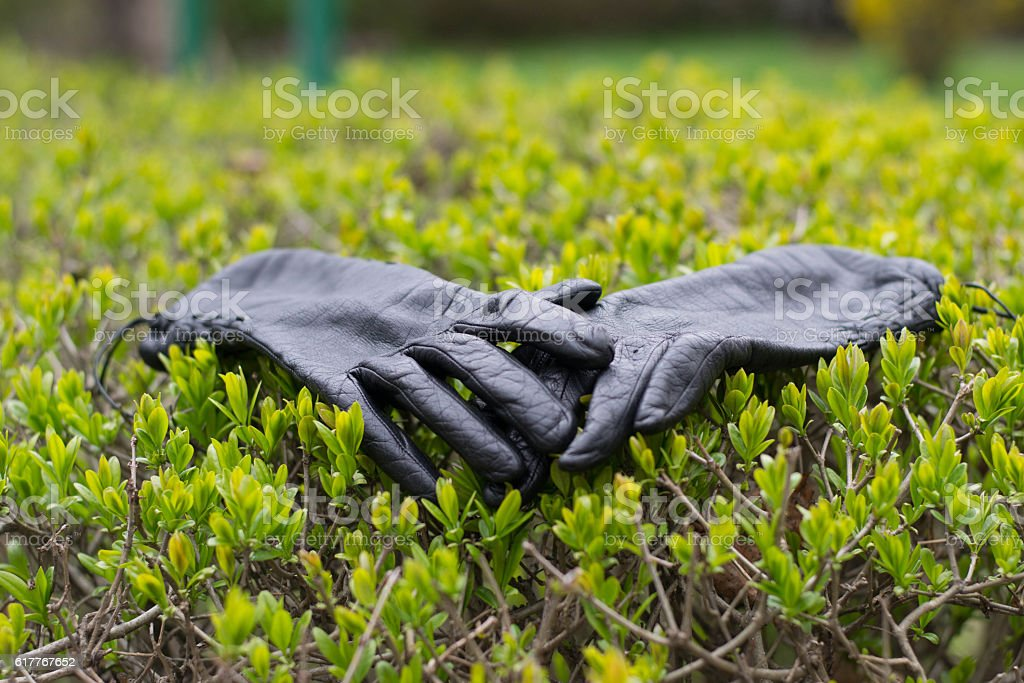 pair of gloves stock photo
