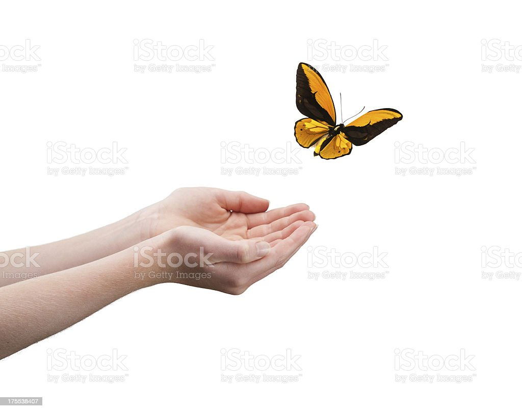 Pair of hands letting a butterfly fly away royalty-free stock photo