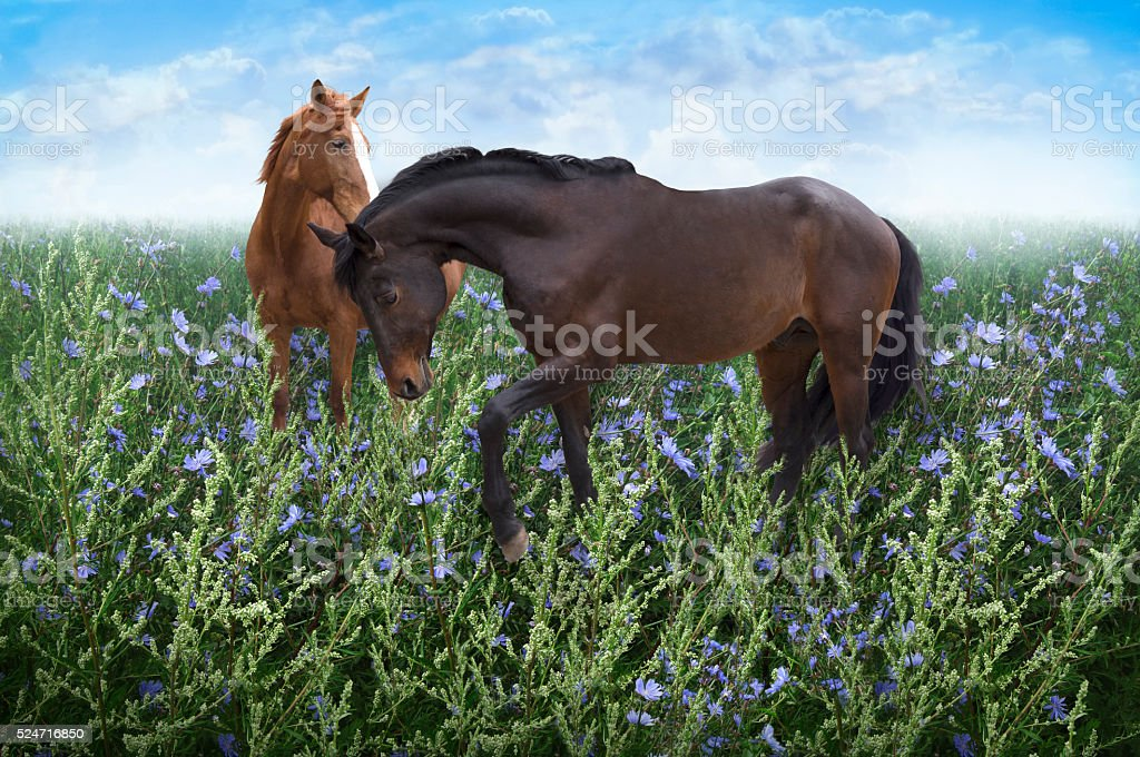 pair of horses in the meadow among the flowers stock photo