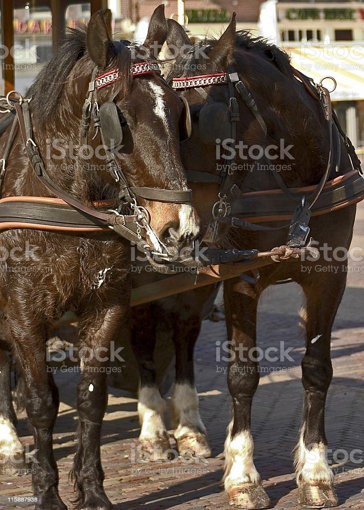 Pair of horses royalty-free stock photo