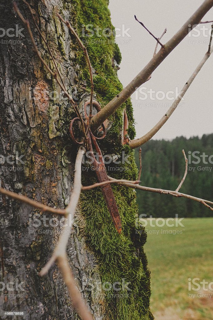 Pair of scissors abandoned on a tree stock photo