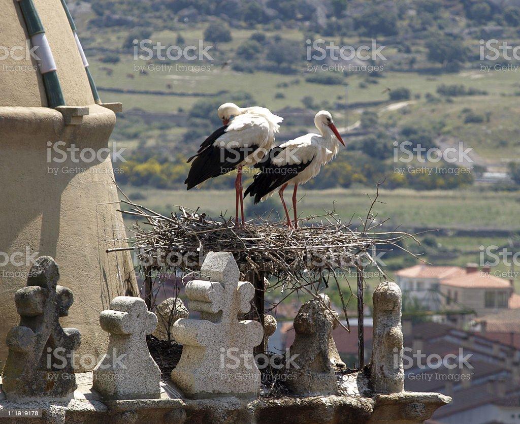 Pair of Storks stock photo