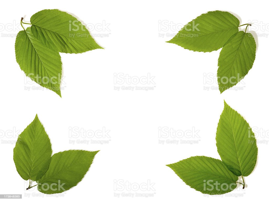Pairs of Beech leaves create a frame royalty-free stock photo