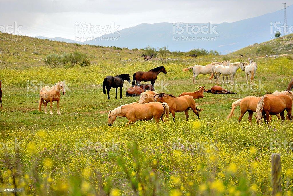 Paisaje caballos salvajes stock photo