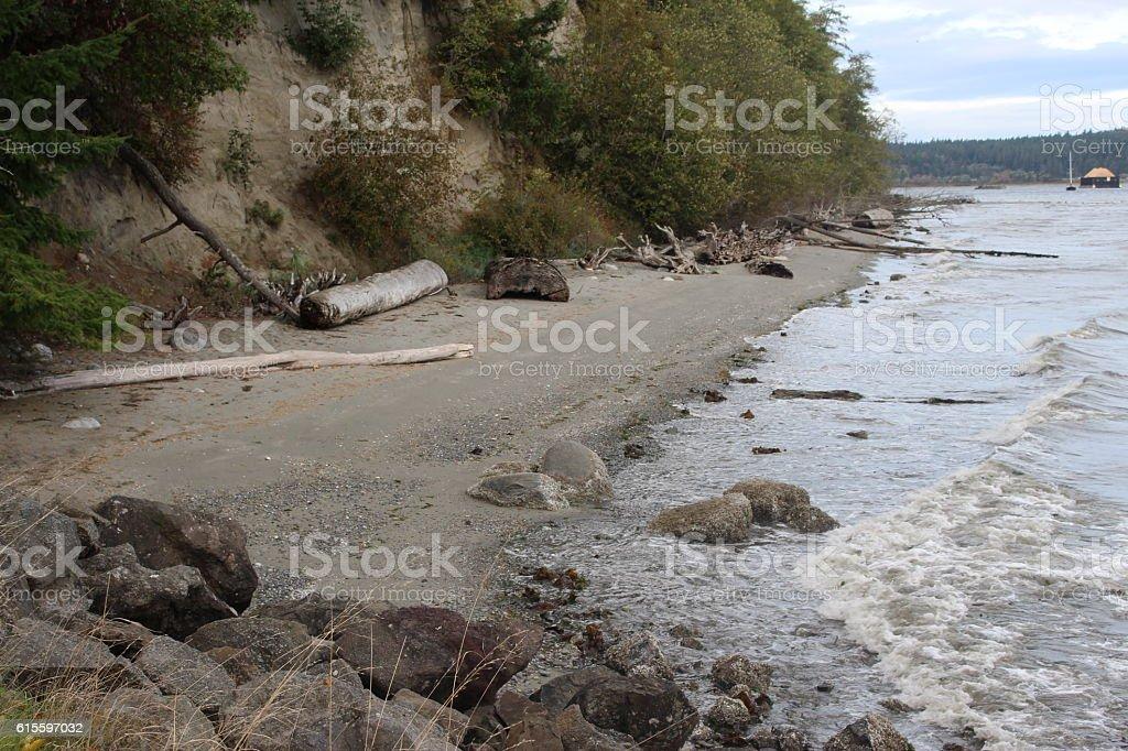 paisaje de bosque y oceano stock photo