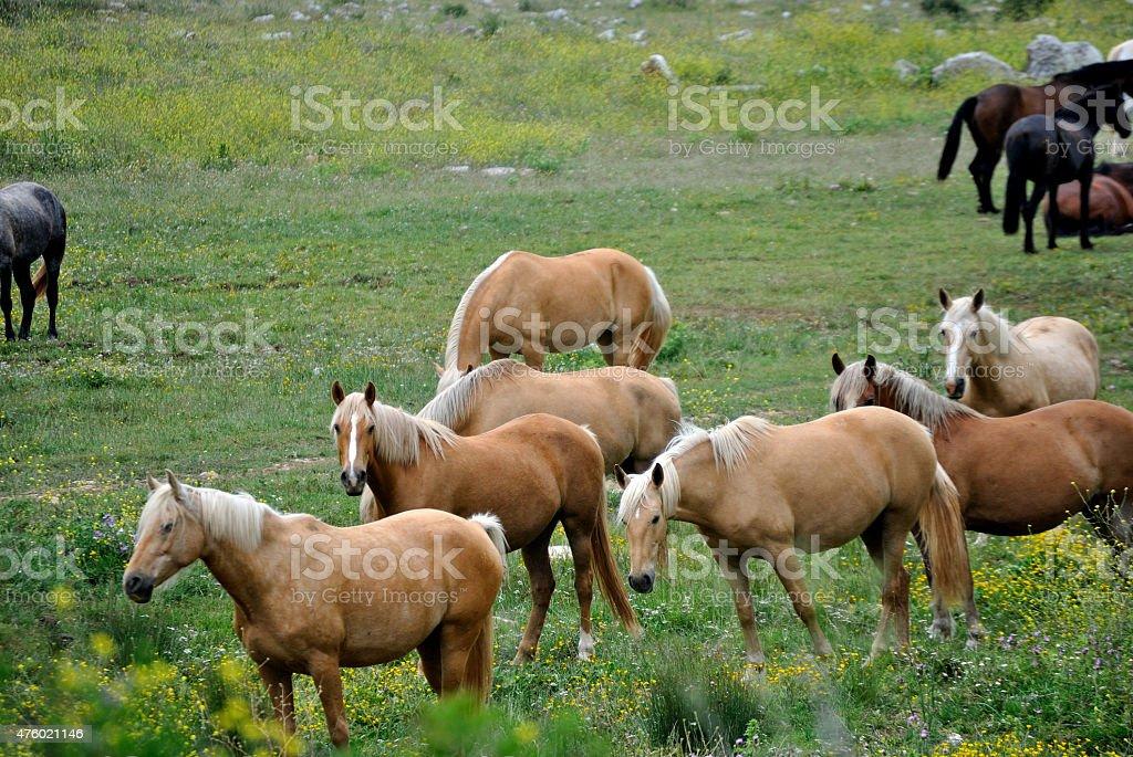 Paisajes caballos salvajes stock photo