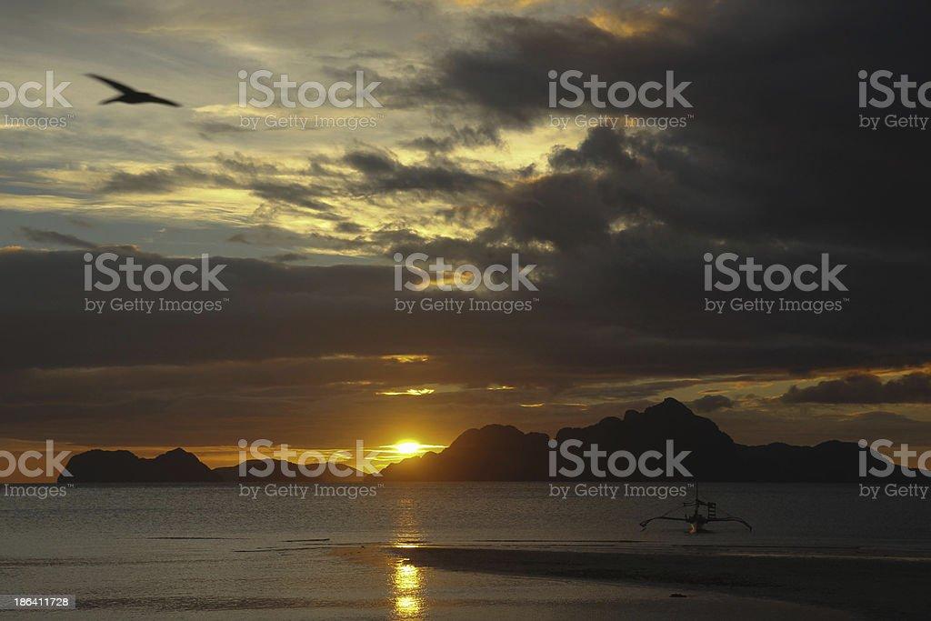 Pajaro volando sobre la playa stock photo