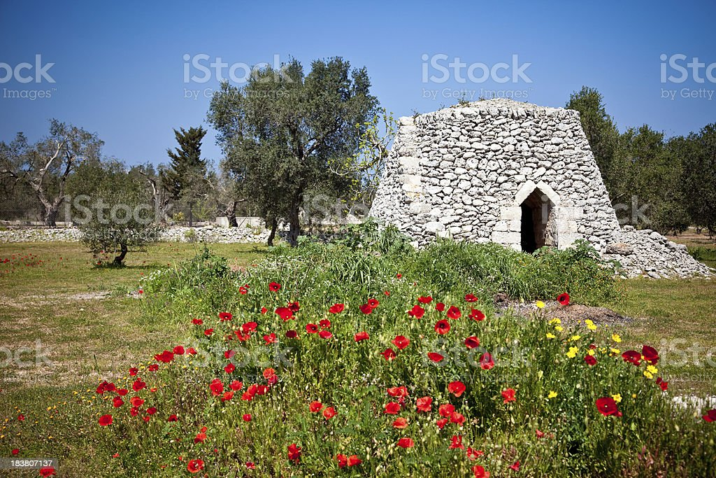 Pajaru in a Cultivation of Olive trees royalty-free stock photo