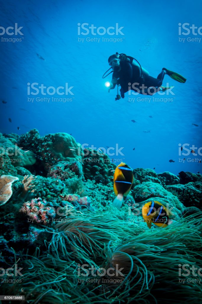 Palau, Micronesia stock photo