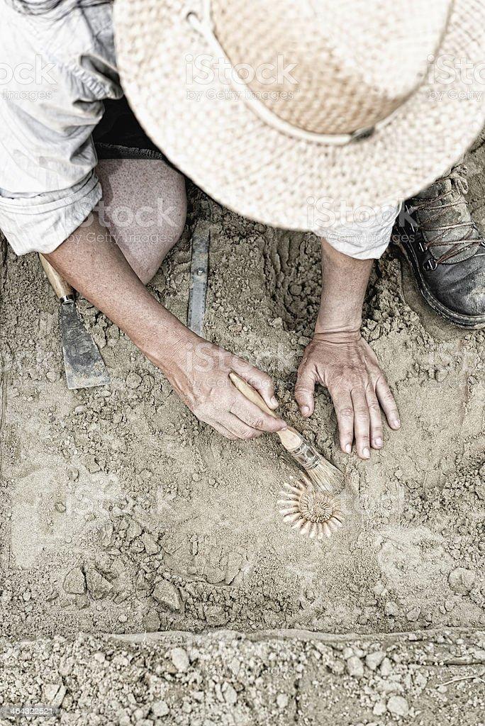 Paleontology stock photo