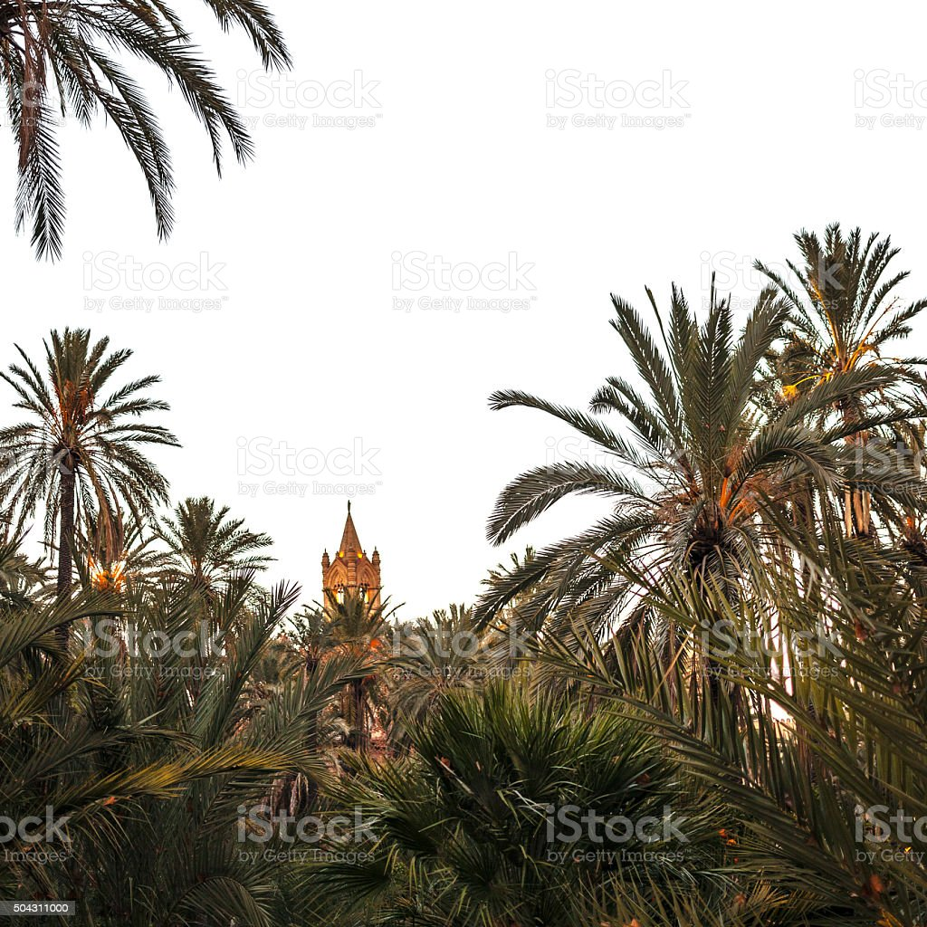 Palermo cathedral behind palm trees. Sicily. stock photo