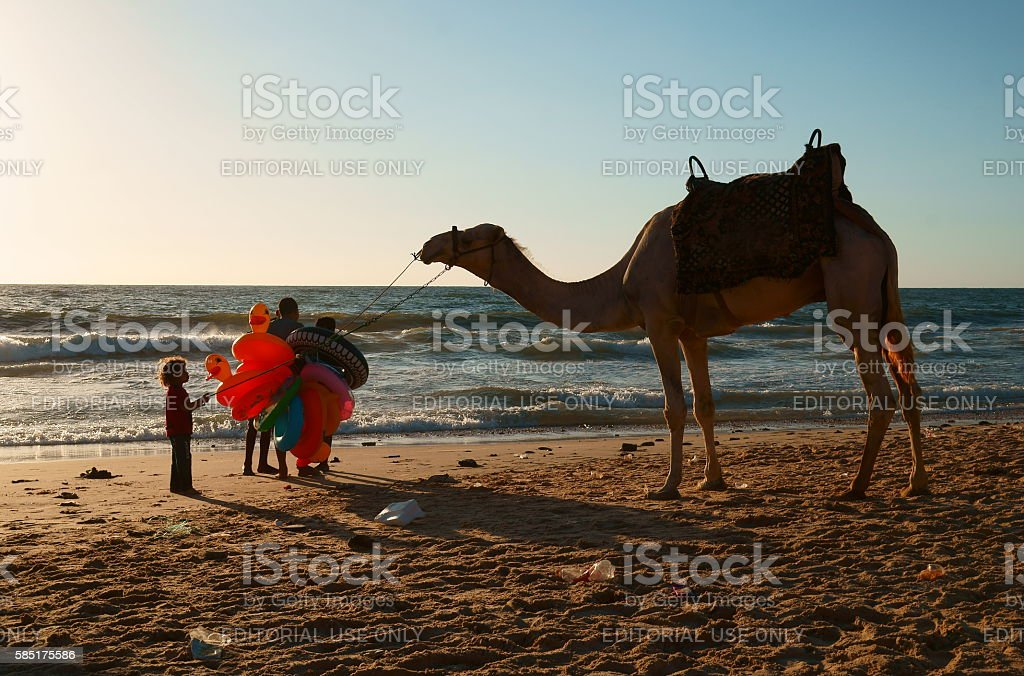 Palestinian child pulling a camel by beach. stock photo