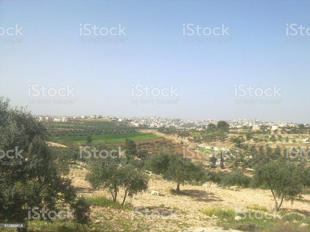 Palestinian Nature stock photo