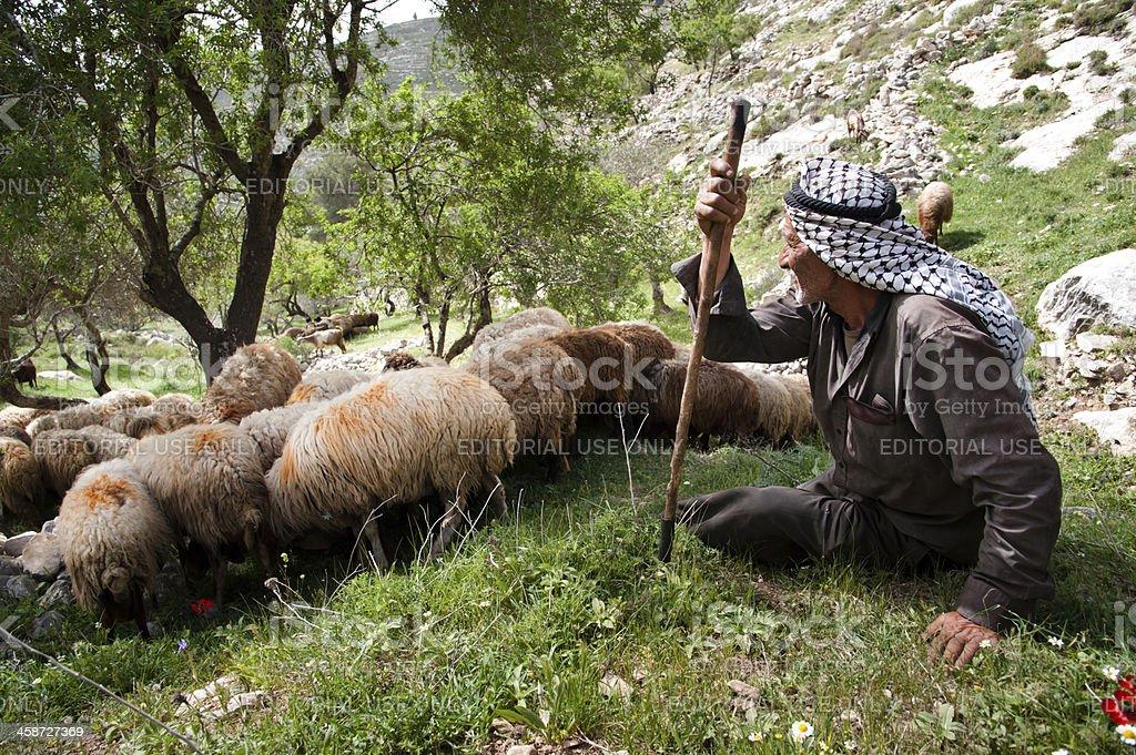 Palestinian shepherd stock photo