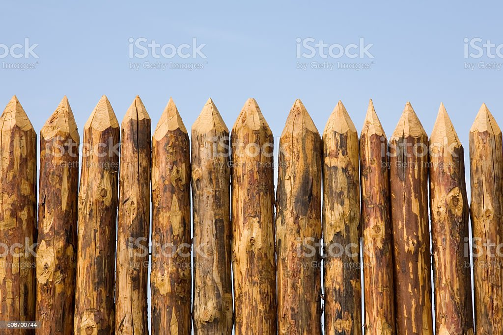Paling close up stock photo