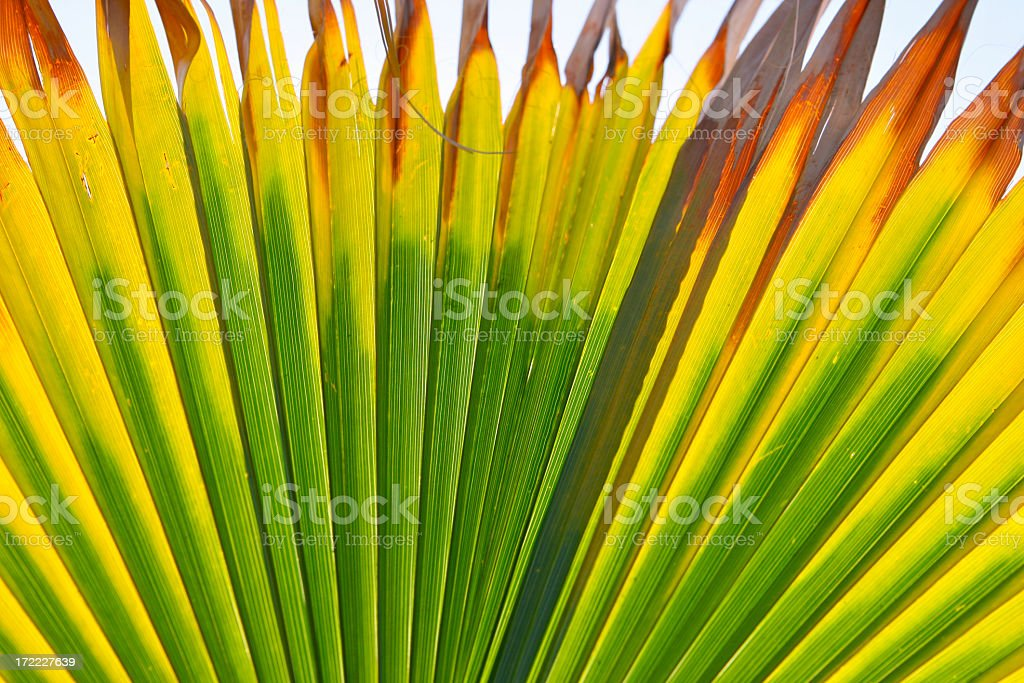 Palm Abstract stock photo