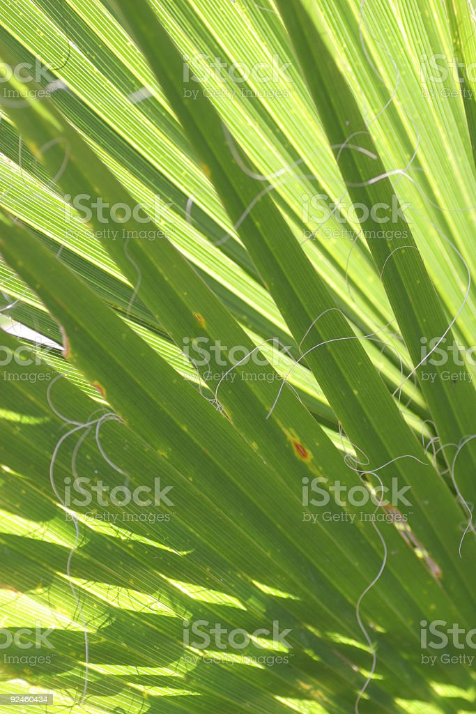 Palm abstract royalty-free stock photo