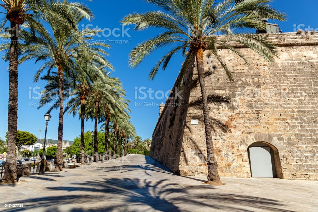 Palm alley stock photo