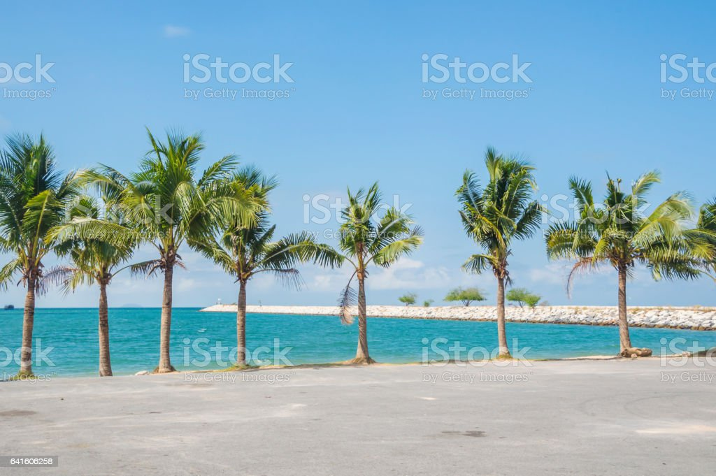 palm and beach stock photo