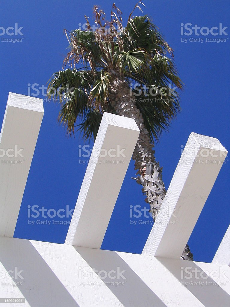 Palm and Pergola royalty-free stock photo