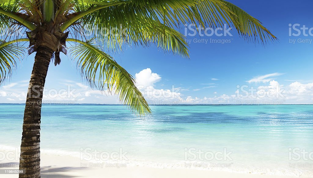 palm and sea stock photo
