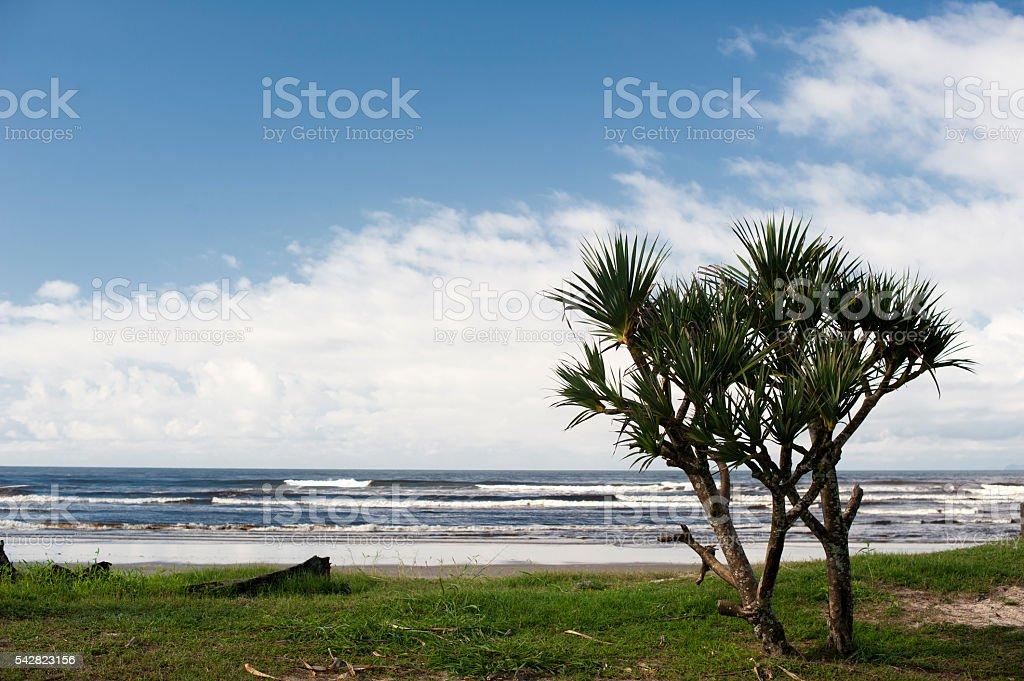 Palm and Sea stock photo